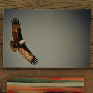 flying-eagle-wall-art